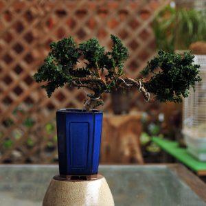 蓝钧釉松树盆景
